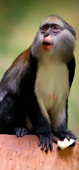 Fauna Gambia